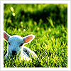 Easter/Spring - Lamb