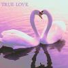 Swan by Me