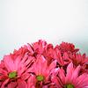 photos/ me- flowers