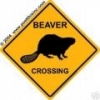 aware_beaver userpic