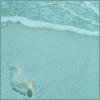 seapetals userpic