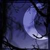 Aurelia Anne: moon