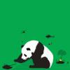 Watch those pandas