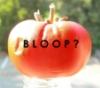 tomato bloop