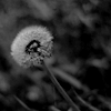 desparejo userpic