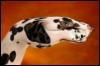 Dalmatian Hand