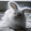 Kat: fuzzy bunny