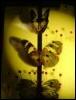 butterflyinabox userpic