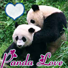 [Animals]Pandas-Love