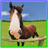 horsesarefree