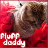 dom, fluff daddy