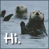 Otters Hi