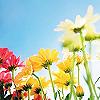 ashbella userpic
