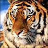 marram userpic