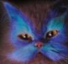 моя котя