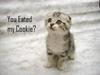 noradeirdre: Sad Cookie Kitty