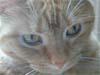 orangetabby userpic