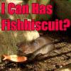 한국 사람이 아니다: Lost-Fishbiscuit