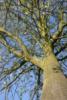 lammas park tree