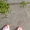 Minerva: barefoot