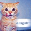 lackofmendacity (Diana): omgsh! - cute kitty