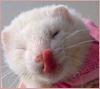 8bit plastic love machine: ferret - tongue