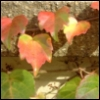 fireandvine userpic