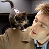 spoofmaster: doctor who-kitten