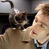 spoofmaster: doctor who-kitten