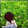 flower feild