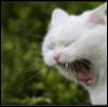 Amelia: dangercat