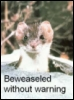 Beweaseled