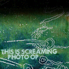 Megs: P!ATD Lyrics -  Screaming Photo Op