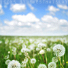 lupeslife userpic