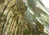 leafchild44 userpic
