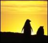 MEG: penguin sun