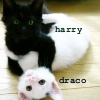 HP: drarry cats