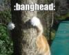 Ellen: bang head