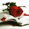 Цветы Rose