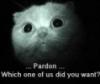 Pardon Kitty