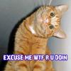 Cat WTFRU Doin