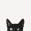 black cat peeking