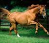 pankina: коня