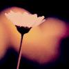 candlelitscreen userpic