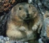 first_lemming userpic