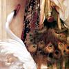 peacock swan