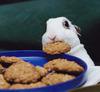 wednesday childe: cookie bunny