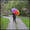 rainbow, colorful, rowan, umbrella