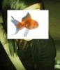 brue_tatue userpic