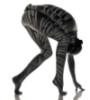 zebrya: взрослая